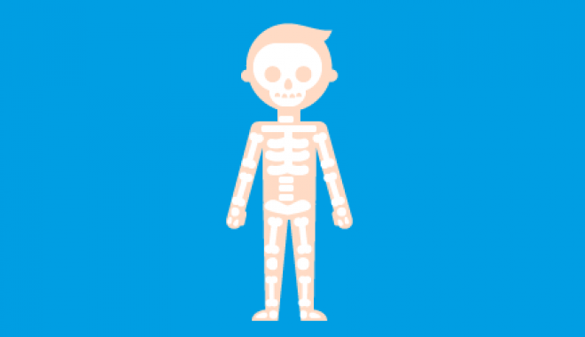 healthy skeleton